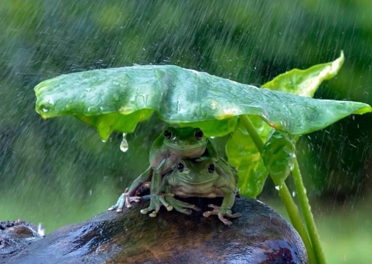 kikkers in rain 3